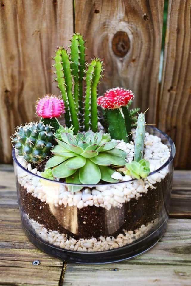 Флорариум из кактусов своими руками