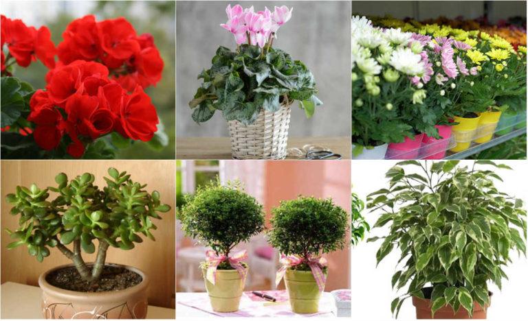 Лучшие домашние цветы для дома